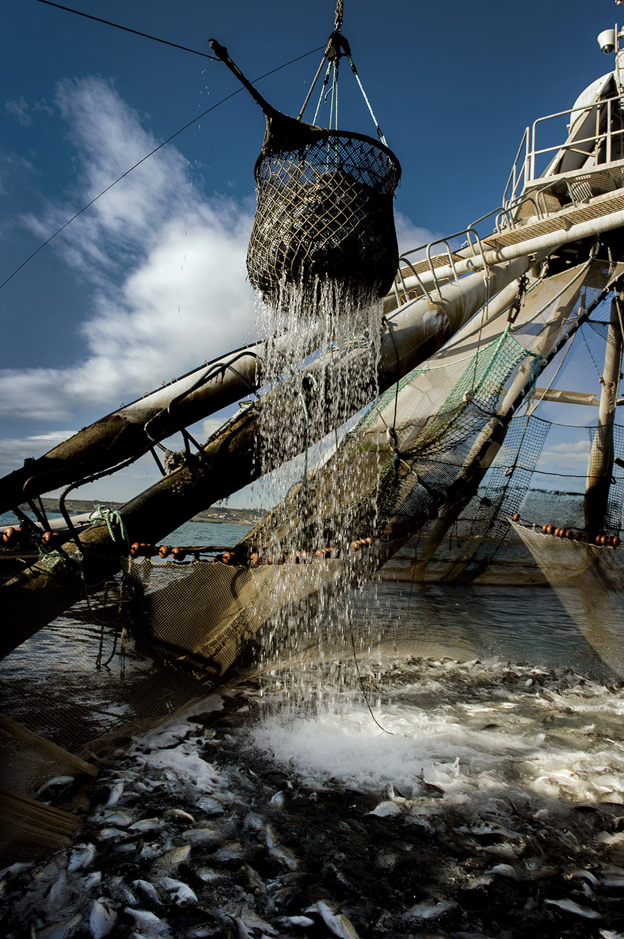 ivano-di-maria-coop-pesce-03
